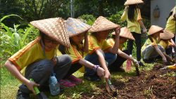 ANCOL – trying to be a farmer