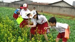 Mengamati Deskripsi Tumbuhan – Bahasa Project