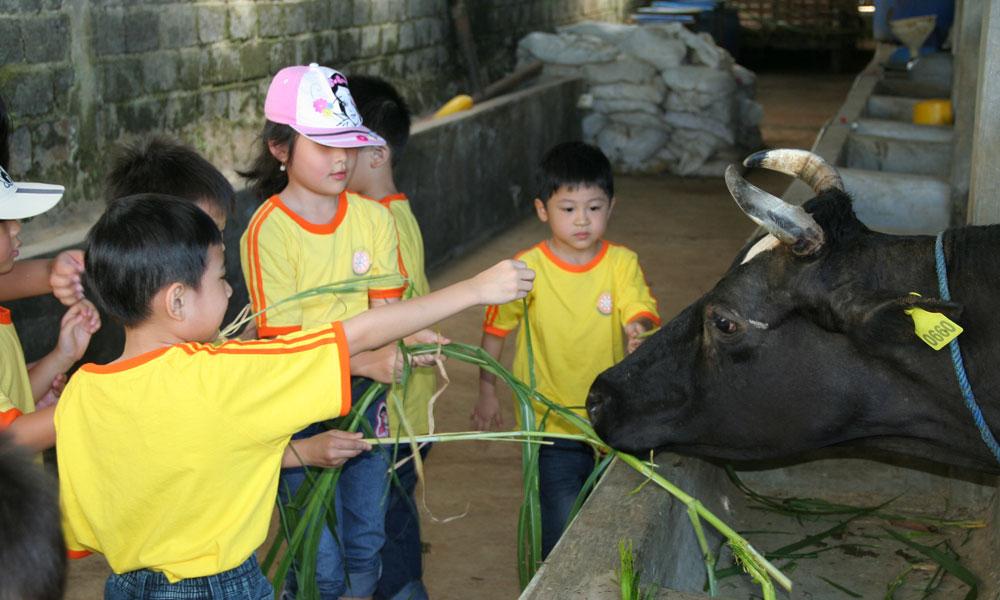 Memberi Makan Sapi – Sentul Farm