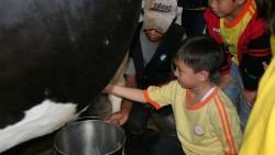 Memeras Susu Sapi – Sentul Farm