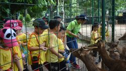 ANCOL – Feeding The Deer