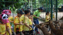 ANCOL – Feeding The Deer